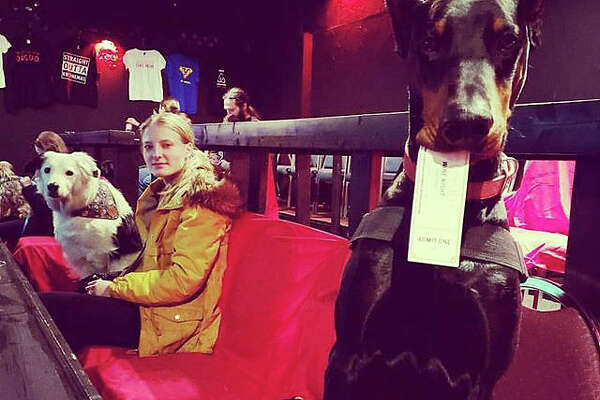 Dogs, wine and movies are all on tap at K9 Cinema in Plano, Texas.
