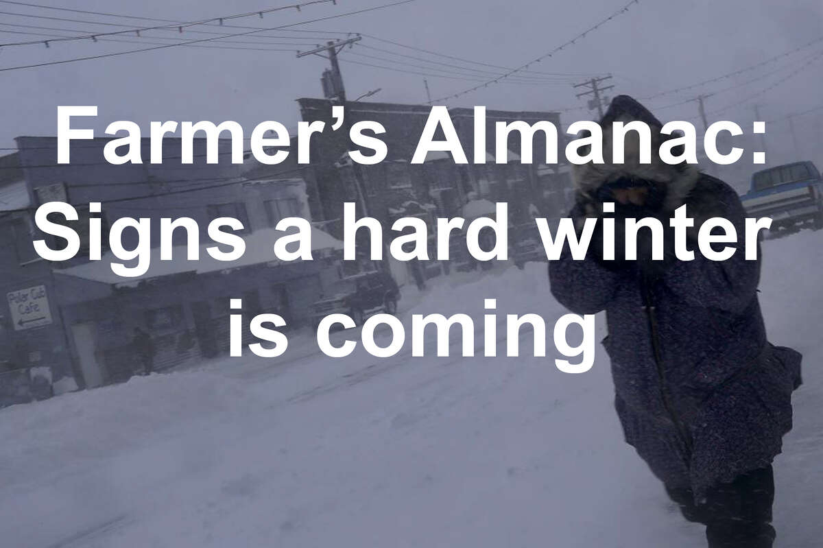 Winter is coming. But how bad will it be? The Farmer's Almanac gathered signs that a hard winter to coming according to folklore...