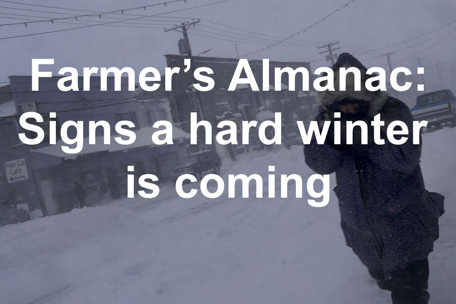 Winter is coming.    But how bad will it be? The Farmer's Almanac gathered signs that a hard winter to coming according to folklore... Photo: Wong Maye-E / Associated Press