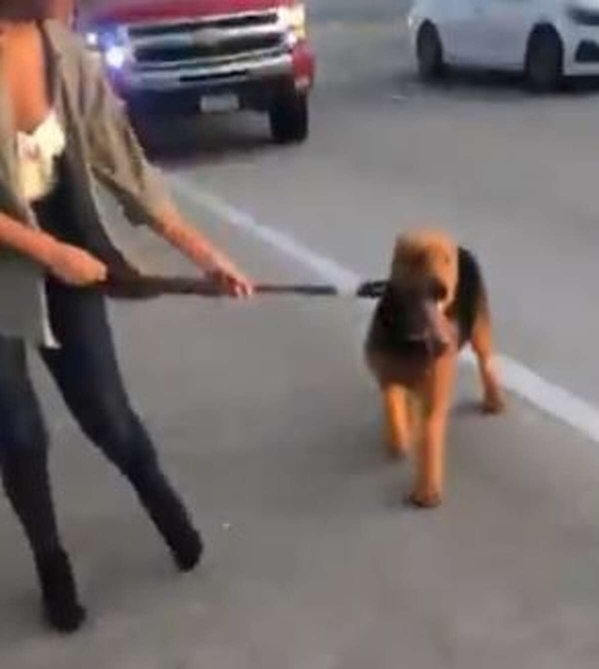 A viral video of a group of strangers that helped stopped traffic on Beltway 8 Sunday evening to save a dog that escaped after his owner got into an accident is warming hearts across the city.