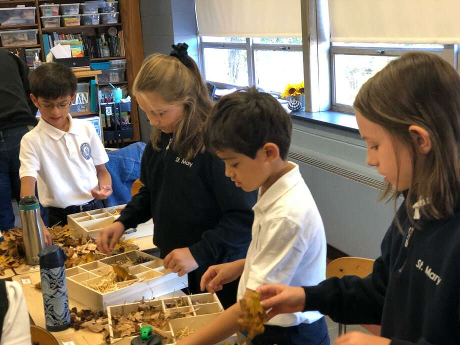 St. Mary School in Milford recently welcomed students and staff from Sacred Heart University to their fourth grade class to learn about the importance of bees. Photo: Contributed Photo.