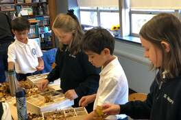 St. Mary School in Milford recently welcomed students and staff from Sacred Heart Universityto their fourth grade class to learn about the importance of bees.