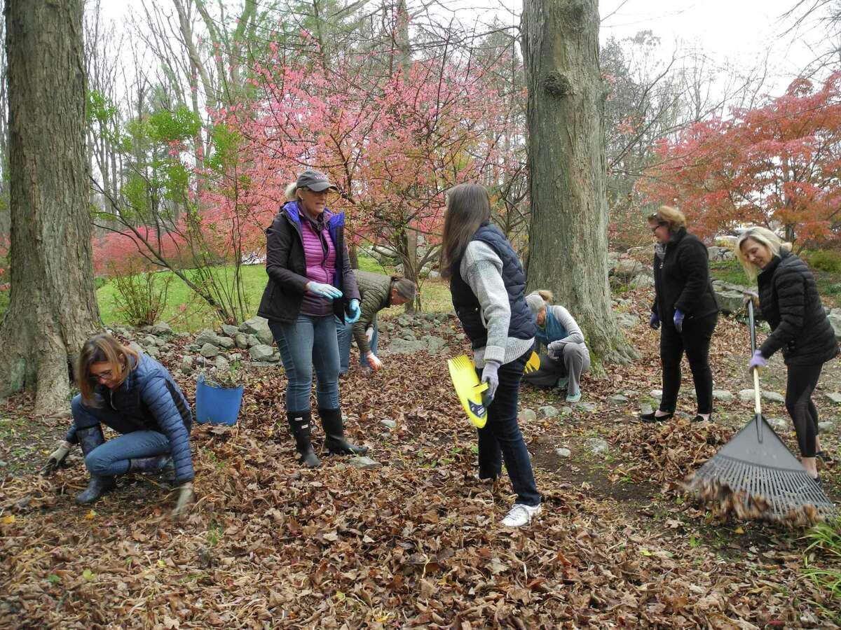Working in the Mary Comstock Wildflower Garden at Old Town Hall on Nov. 7 are Wilton Garden Club members, from left, Pam Nobumoto, Nancy Greeley, Heidi Riggs, Yolanda Bonomo, Lindsay Fontana, Denise Fritz and Libbie Carroll. The garden, named for an original member of the club, is one of the areas undergoing a sprucing up at the historic building.