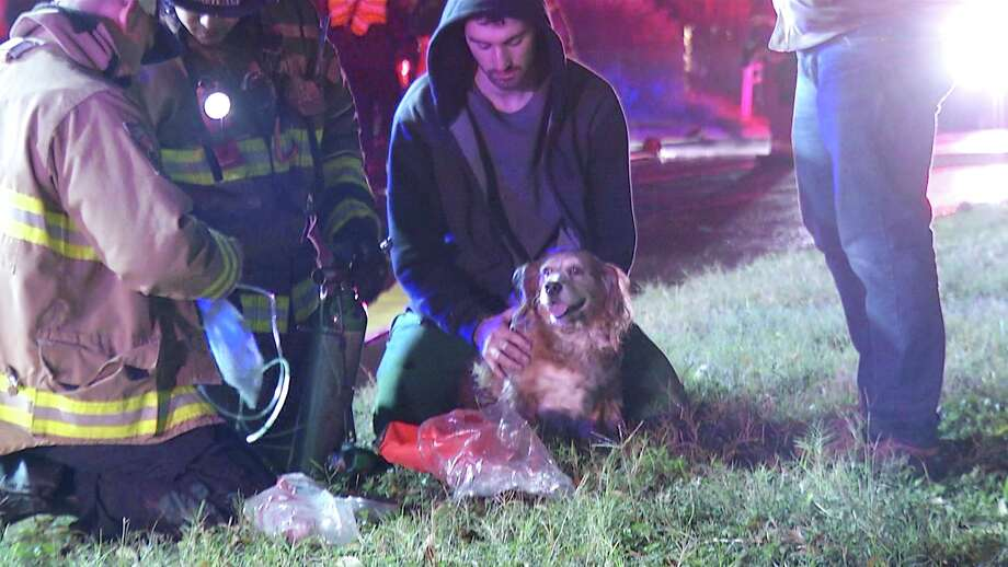 Two dogs helped a family get out safely after a fire started in a Northwest Side home. Photo: Ken Branca