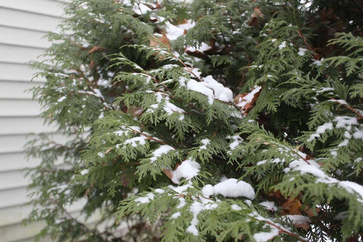 Members of the Big Rapids area community woke up to a light dusting of fresh snow Thursday morning.