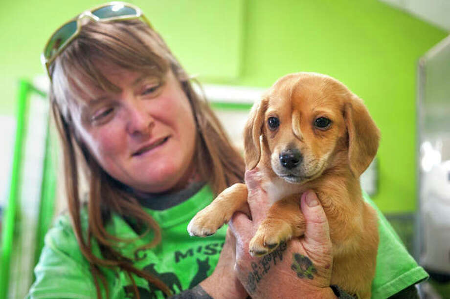 "Mac's Mission animal rescue founder Rochelle Steffen holds a 10-week-old golden retriever puppy with a small tail growing between his eyes, dubbed ""Narwhal,"" in Jackson, Missouri. The puppy's condition has led to widespread online notoriety and, Steffen said, a flood of adoption offers. Photo: Tyler Graef 