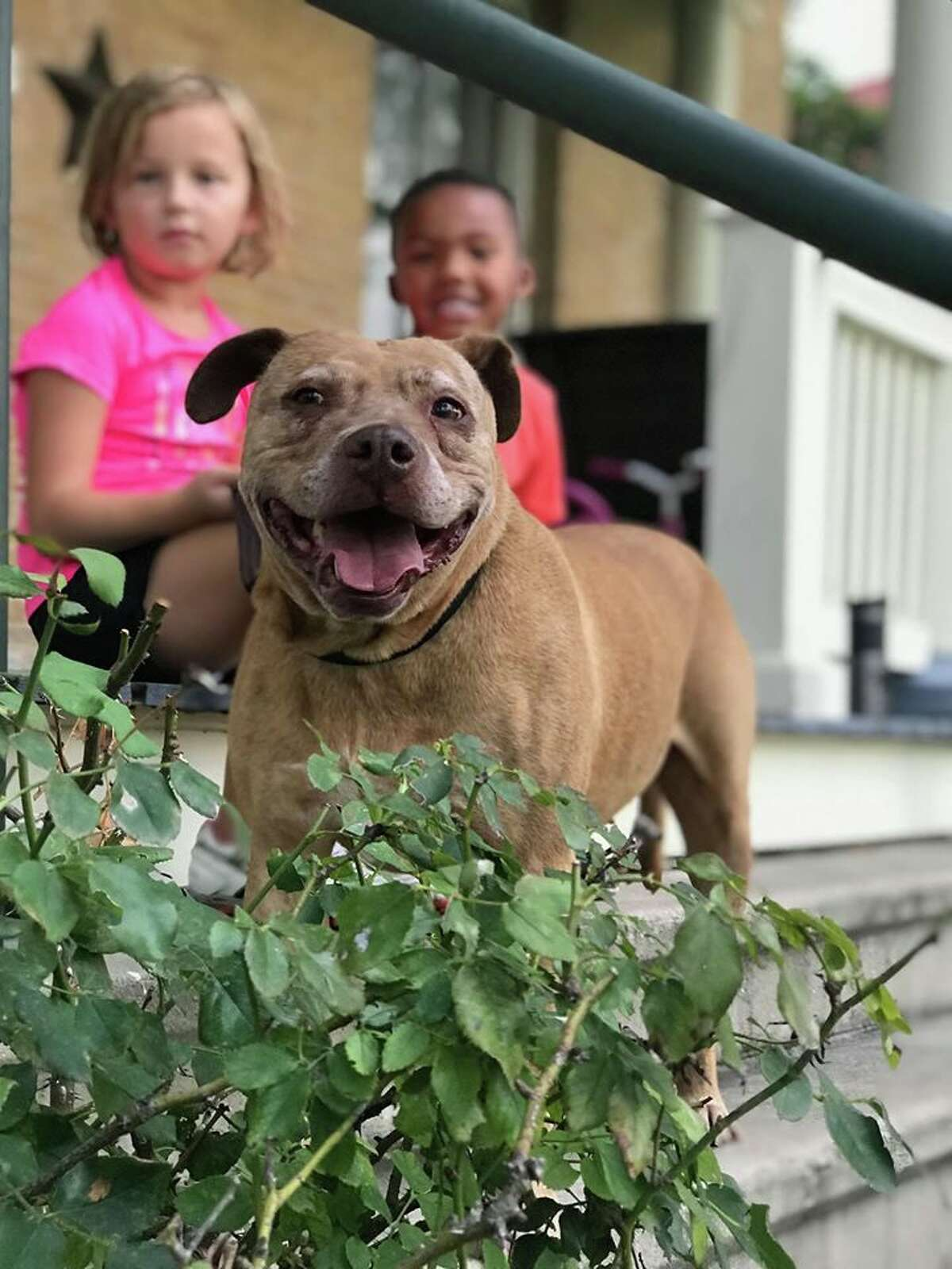 Meet Cheeky, a 12-year-old dog up for adoption at San Antonio Pets Alive!