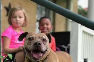 Meet Cheeky, a 12-year-old dream dog that is up for adoption at San Antonio Pets Alive!