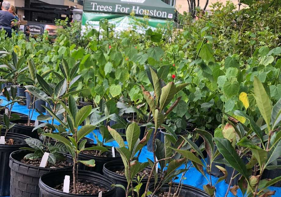 Trees for Houston in partnership with The Market at Springwoods Village planned a tree giveaway event for Saturday, Nov. 16, 2019, featuring hundreds of 5-gallon trees for community members to take home for free. Photo: Courtesy Of Elmore Public Relations, Inc. / Submitted