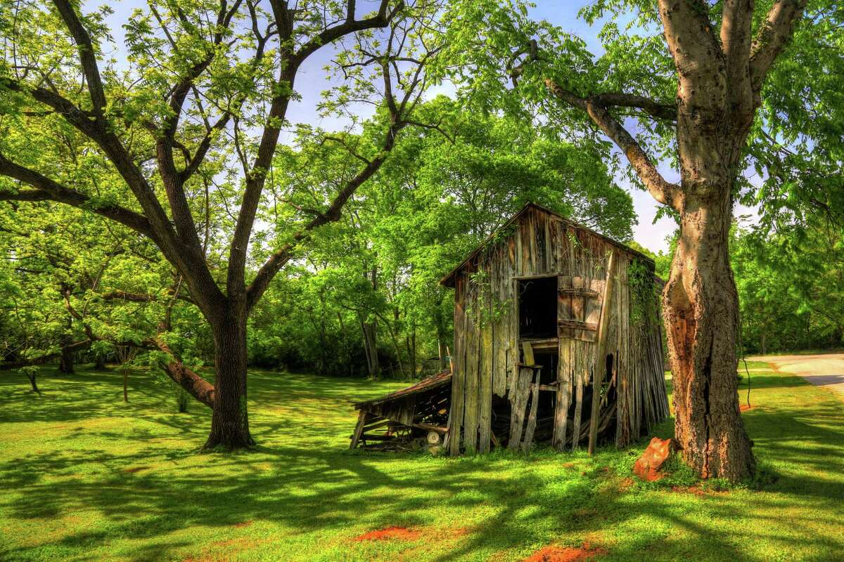 A shed in rural south Carolina among a grove of pecan trees.