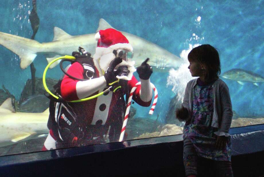 "Santa will don scuba gear at The Maritime Aquarium at Norwalk to demonstrate that sharks are nice, not naughty, during ""Shark-Diving Santa"" presentations on November 29-30 and on Thursdays, Saturdays and Sundays in December. Photo: Maritime Aquarium / Contributed Photo"