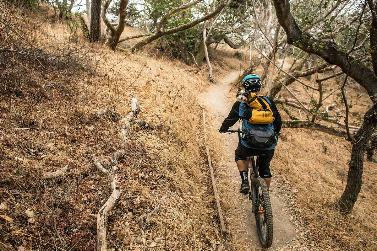 A mountain biker and a dog in his backpack ride along the dry trails at Sugarloaf Hill on Thursday, November 14, 2019 in San Mateo, Calif. The U.S. Drought Monitor is reporting that 81% of California is abnormally dry as of this week.