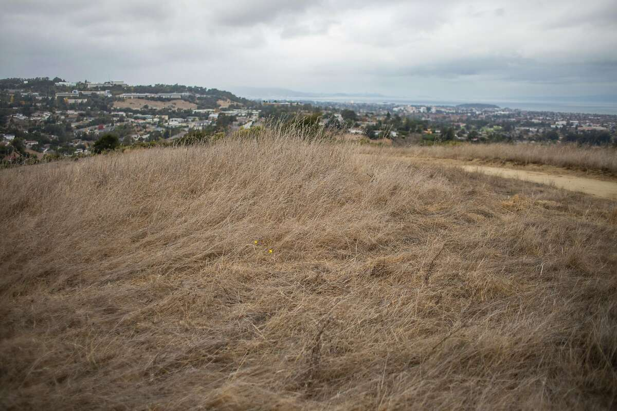 The hiking trails on Sugarloaf Hill are dry and cracked along with the tall grasses that grow on the hill's top on Thursday, November 14, 2019 in San Mateo, Calif. The U.S. Drought Monitor is reporting that 81% of California is abnormally dry as of this week.