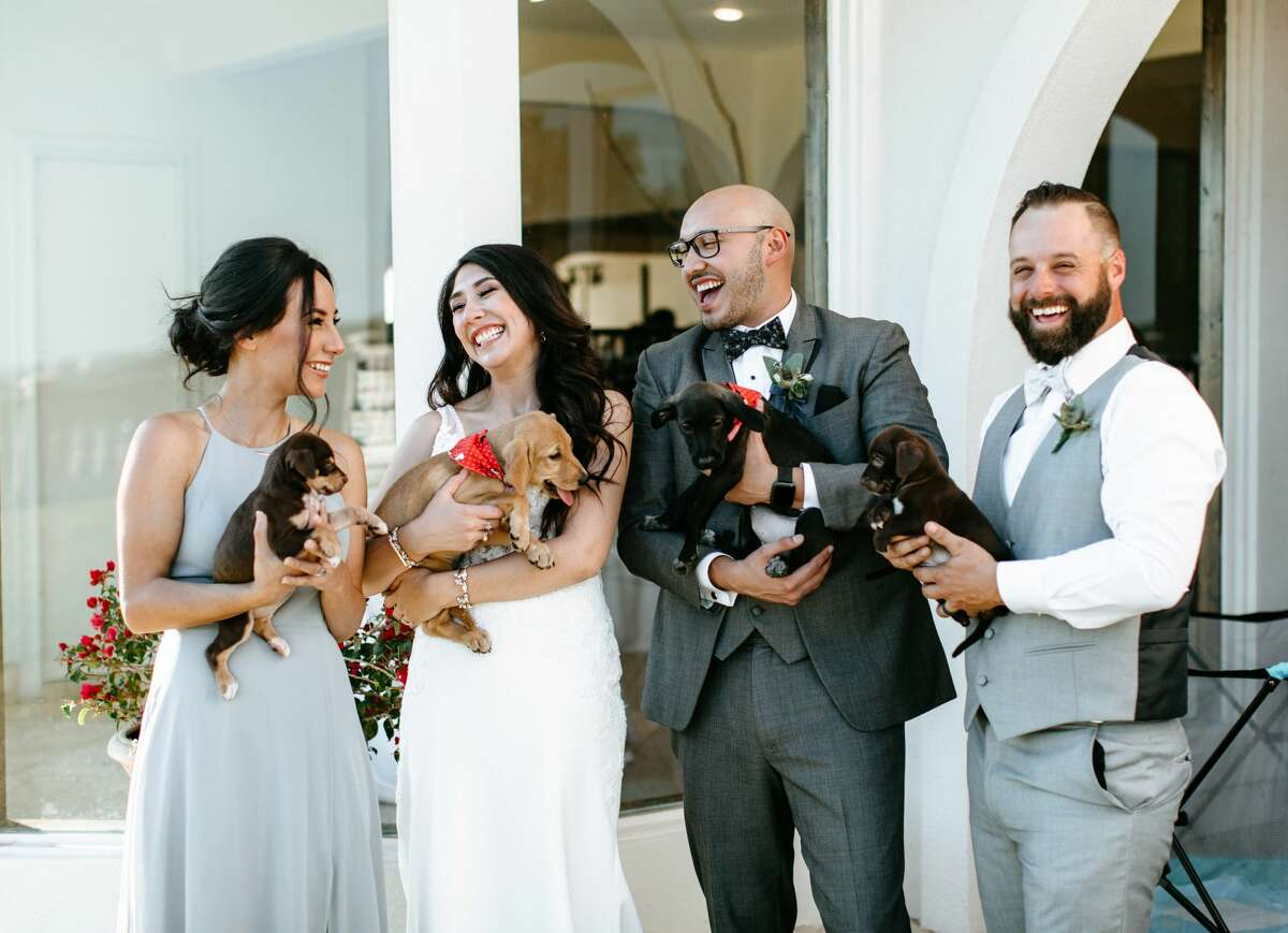 San Antonio couple, Alexis and Eric Castillo, recently partnered with San Antonio Pets Alive! to have a puppy cuddling session at their wedding with the hopes of spreading awareness for pet adoption. Here are photos from their wedding on Saturday, October 19 at The Villa at Cielo Vista on the Northwest Side.