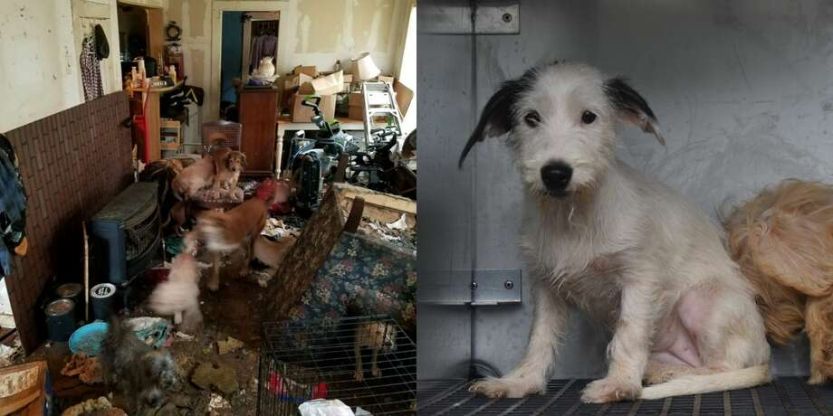 Police discovered 24 animals in horrific conditions at a southeast Houston home Nov. 13 after an elderly woman living at the home fell and called local law enforcement for help, according to officials with the Houston Humane Society (HHS). Photo: Houston Humane Society