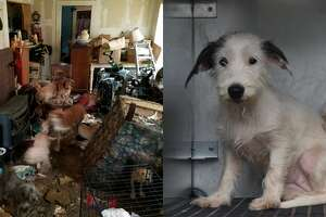 Police discovered 24 animals in horrific conditions at a southeast Houston home Nov. 13 after the owner, an elderly woman, fell and called local law enforcement for help, according to officials with the Houston Humane Society.