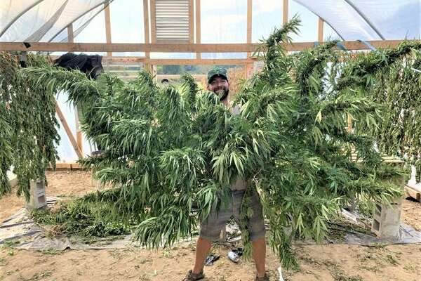 Nathaniel Kamp displays freshly harvested hemp plants earlier this fall in his first season of growing the plants in Calhoun County.