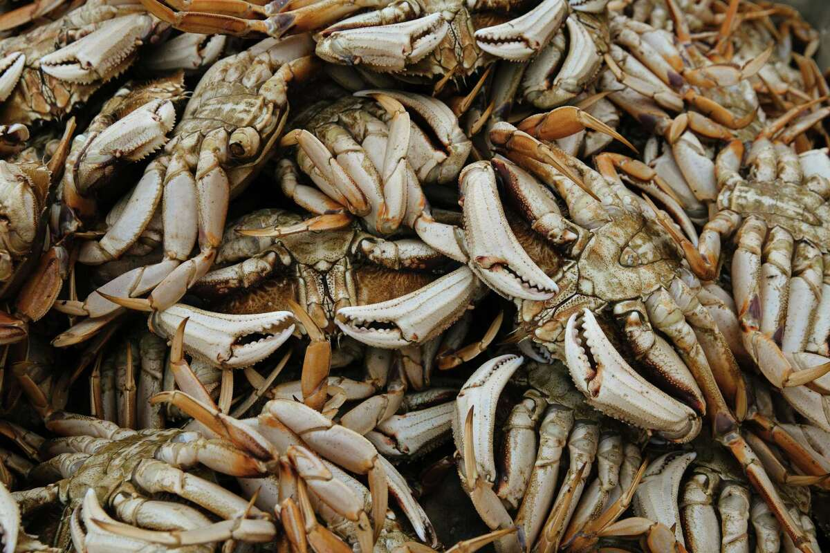 Dungeness crab, turned on their backs to prevent their escape, at Pier 45 in San Francisco.
