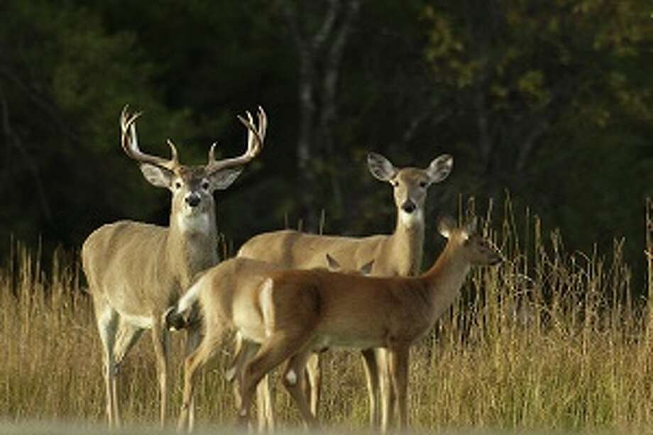 The baiting ban is still in effect and being enforced in some areas of the Upper Peninsula and all of the lower peninsula. Photo: (Courtesy Photo)
