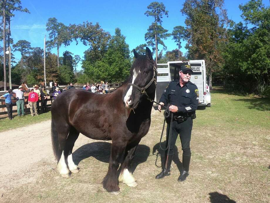 """Admiral"" the Gypsy Vanner served in the Houston Police Department's Mounted Patrol Unit for several years. He has retired to Henry's Home in Conroe. Photo: Submitted Photo / Submitted Photo"