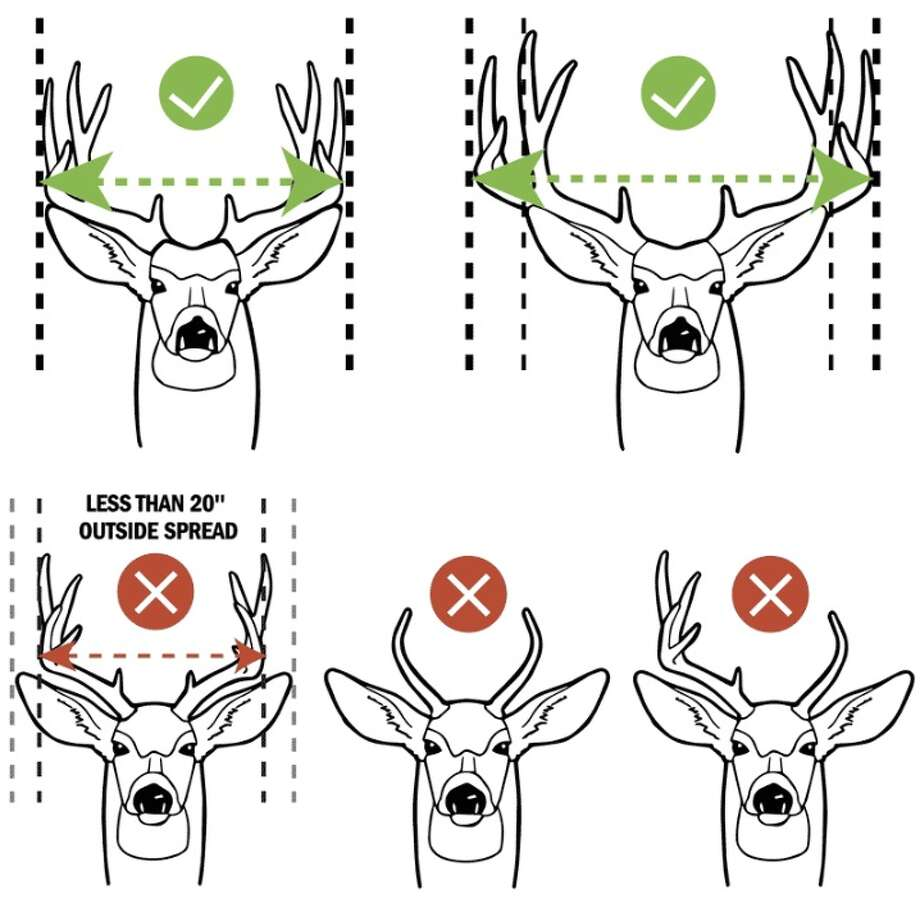 Mule Deer Buck Antler Restrictions Guide: Legal vs. Not Legal Photo: Courtesy Illustration