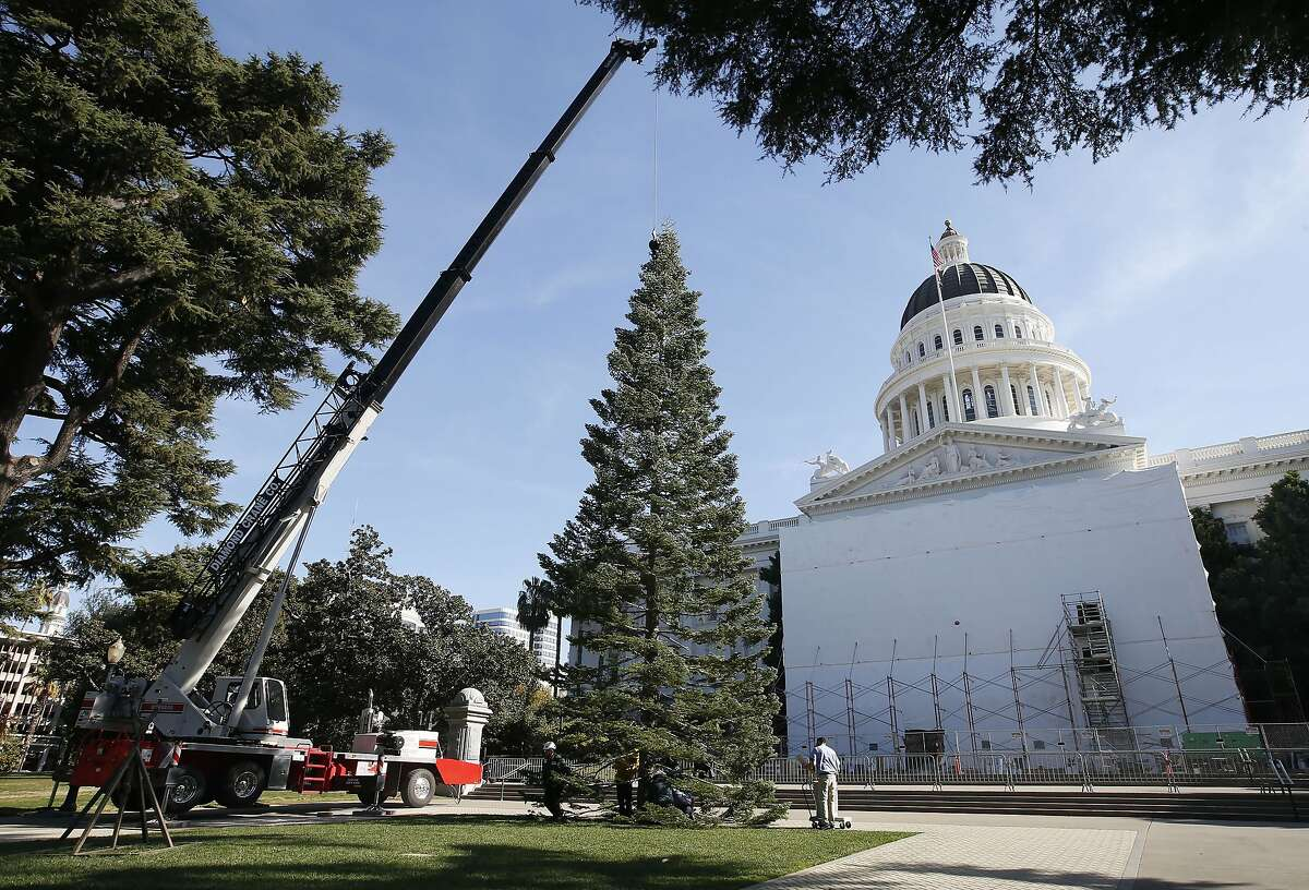 Workers position the state Christmas Tree in front of the state Capitol in Sacramento, Calif., Thursday, Nov. 7, 2019. The more than 60-foot tall White Fir tree was cut from the Latour Demonstration State Forest near Redding and transported to the Capitol by the California Department of Forestry and Fire Protection. The tree will be decorated with hundreds of hand-crafted ornaments donated from the California Department of Developmental Services and 10,000 ultra-low-wattage light-emitting diode bulbs. Lighting ceremonies will be held in early December. (AP Photo/Rich Pedroncelli)