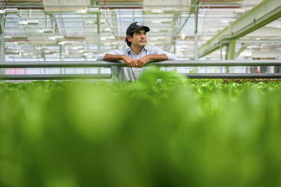 Viraj Puri, co-founder and CEO of Gotham Greens, in the company's facility in Hollis, N.Y. Gotham Greens builds and operates ecologically sustainable greenhouses in cities across America. Photo: Washington Post Photo By Salwan Georges / The Washington Post