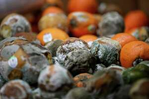 The Houston Food Bank lost 1.8 million pounds of food, including produce, when a malfunction with a cooling unit caused an ammonia leak in three of the center's refrigeration areas last week. Rotting oranges were photographed in one of the center's refrigeration areas on Tuesday, Nov. 19, 2019, in Houston.