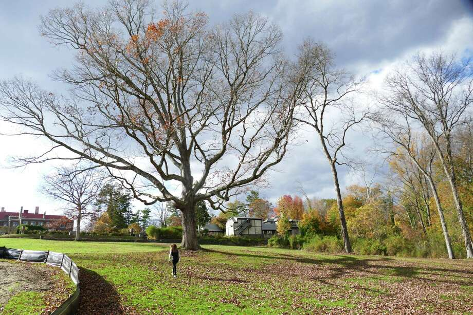The Anderson Pond in New Canaan's Waveny Park is undergoing a $350,000 renovation with money donated by the Harlan and Lois Anderson Family Foundation. Pictures were taken in November, 2019. Photo: Grace Duffield / Hearst Connecticut Media