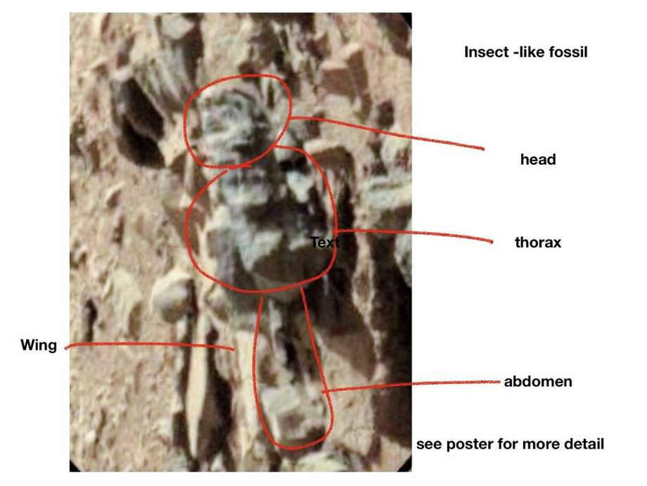 Entomologist William Romoser annotated this NASA Mars rover image to suggest it shows an insect-like form. Photo: NASA/JPL-Caltech/Annotations By William Romoser