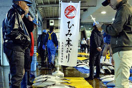 About 200 kanburi winter yellowtail arrived at the Himi fishing port in Himi, Japan, Wednesday morning, signaling the arrival of the kanburi season. The fish were caught with an anchored offshore net in Toyama Bay.