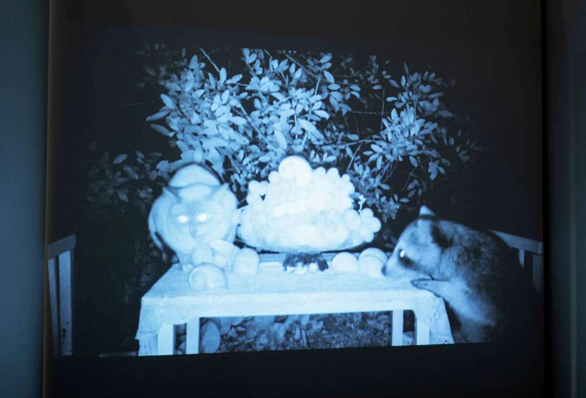 Dana Sherwood, Feral Cakes, 2017 Digital video, sound. Photo William Jaeger