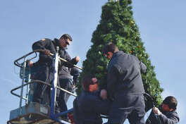 Jacksonville firefighters Chris Kesler (top, from left), Matt Leischner and Joey Hosteny set up the city's Christmas tree Wednesday on the downtown square as firefighter Eric Fair watches from a crane, ready to help his colleagues. Hosteny (at right, from left) keeps an eye on fellow firefighter Chris Kesler as he picks up a patch of Christmas tree to add to the display.