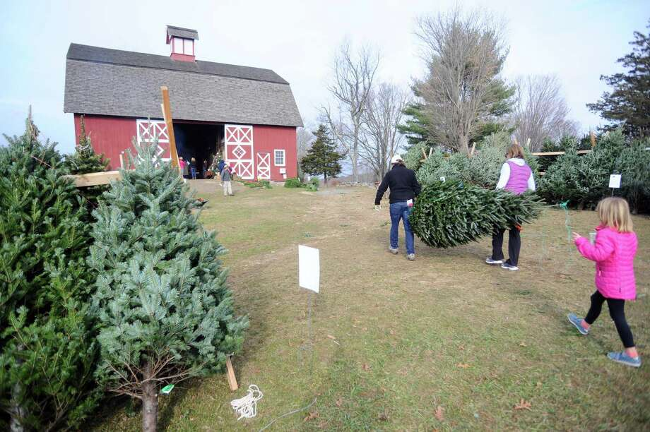 The Ambler Farm annual greens sale, which begins Nov. 30, will offer Christmas trees, wreaths and other festive greenery. Photo: Michael Cummo / Hearst Connecticut Media / Stamford Advocate