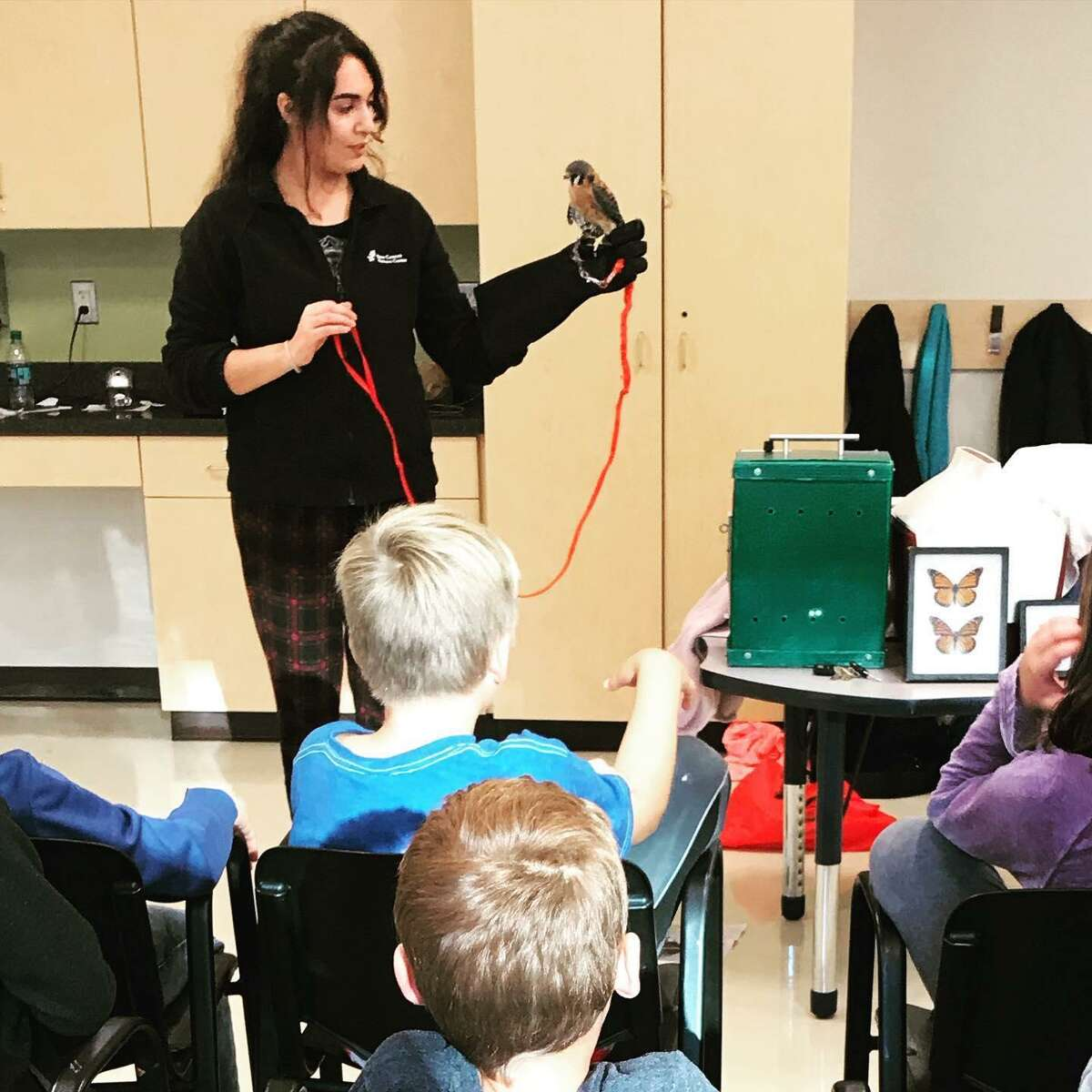 Christiana Ricchezza of the New Canaan Nature Center shows off a falcon to students in the Wilton Weekday Warriors program sponsored by Parks and Recreation.