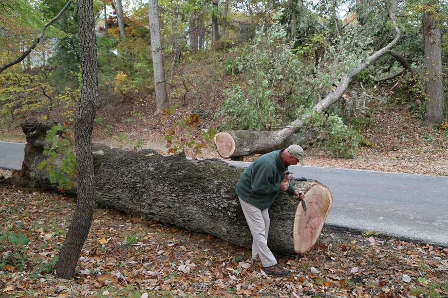 Dean Norton, director of horticulture at Mount Vernon, chisels away an area on the trunk of a 230-year-old tree that fell at the home of George Washington. Photo: George Washington's Mount Vernon Handout Photo / George Washington's Mount Vernon