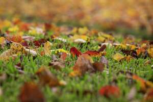 Colorful fallen leaves on Buffalo Speedway are photographed on Friday, Nov. 22, 2019, in Houston.