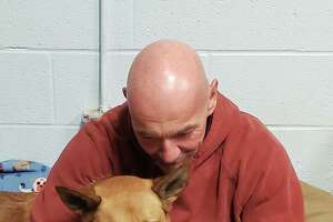 Harwinton Animal Control Officer Tom Mitchell and Flash read the flood of inquiries about adopting Flash after a Hearst Connecticut Media report about the dog, who was trained to be a police dog bit has remained in the pound for two years.