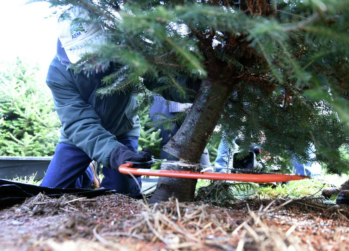 State Agriculture Commissioner Richard Ball cuts a Christmas tree for the Adirondacks New York Welcome Center during an event to promote the purchase of state grown Christmas trees on Monday, Nov. 25, 2019, at Boulder Brook Farm in Malta, N.Y. (Will Waldron/Times Union)