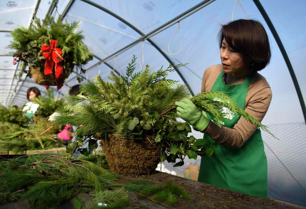 Mie Uemura assembles a festive holiday basket at Sam Bridge Nursery in Greenwich, Conn. Thursday, Nov. 21, 2019. More than 50 volunteers from the Greenwich Japanese School and Greenwich High School worked with Greenwich Greenwich and Clean to assemble 116 festive holiday arrangements.