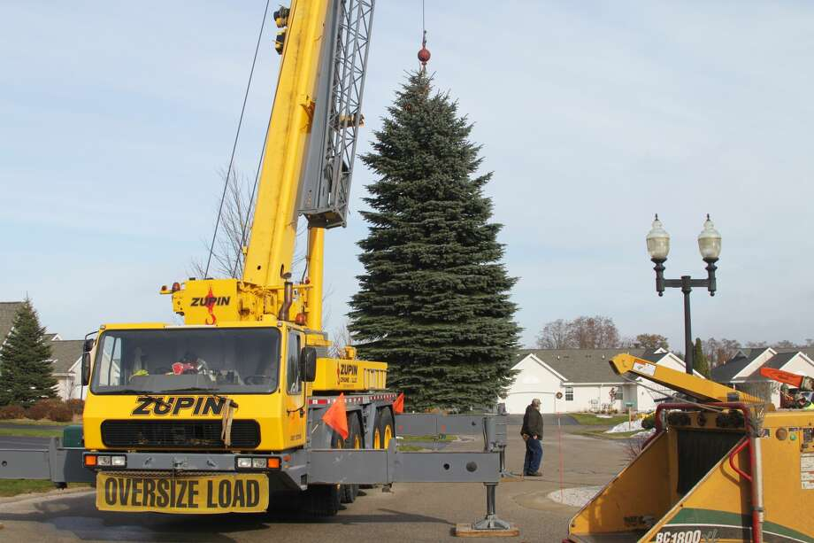Manistee Department of Public Works crews cut down the City of Manistee's evergreen tree on Monday, which will be displayed after the Sleighbell Parade on Dec. 7. Zupin Crane and Patrick Swidorski Trucking donated their time and effort. Photo: By Ashlyn Korienek