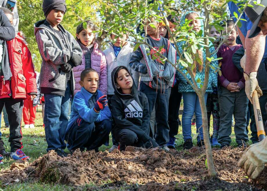Second-graders at Jenkins Elementary School watch as members of the Harris County Precinct 4's Legacy Trees Project plants a 'Century Tree' from Texas A&M University. Photo: Courtesy Of Spring ISD, Web Specialist & Photographer / Spring Independent School District