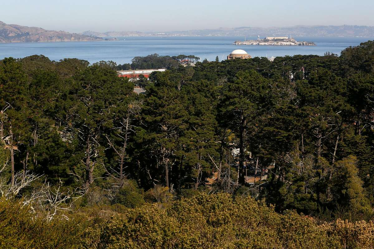 The Tennessee Hollow Watershed seen from Inspiration Point in San Francisco, Calif. on Thursday, Oct. 30, 2019. When the National Park Service took over, the Presidio was a patchwork of landfills, old ammunition dumps, scarred landscapes, creeks relegated to pipes and lots and lots of non-native and imported plants. After 25 years of restoration, the habitat looks a lot more like it should -- coastal dunes, dune scrub, native grassland and oak woodlands.