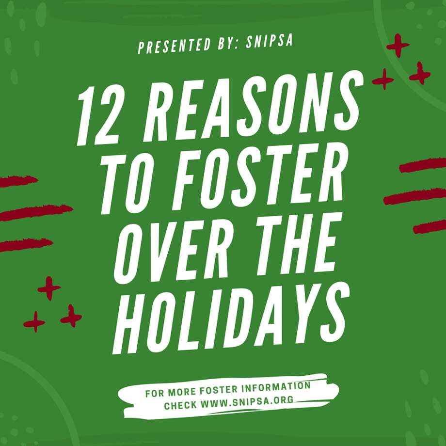 Here are 12 reasons to foster over the holidays, according to SNIPSA (Spay-Neuter-Inject-Protect San Antonio). Photo: SNIPSA
