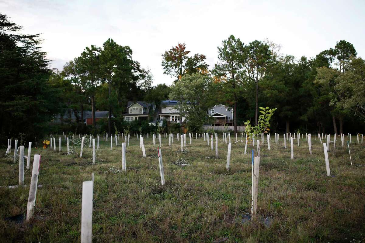 Young trees are protected at the Chantilly Ecological Sanctuary along Briar Creek in Charlotte, N.C.