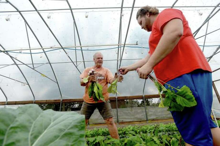 Steve and son Brent Heironimus harvest from their organic house-grown produce at the family's farm, Donna's Farm, in Fannett as they prepare for Wednesday's farm market Thanksgiving produce sale.  Photo taken Tuesday, November 26, 2019 Kim Brent/The Enterprise Photo: Kim Brent / The Enterprise