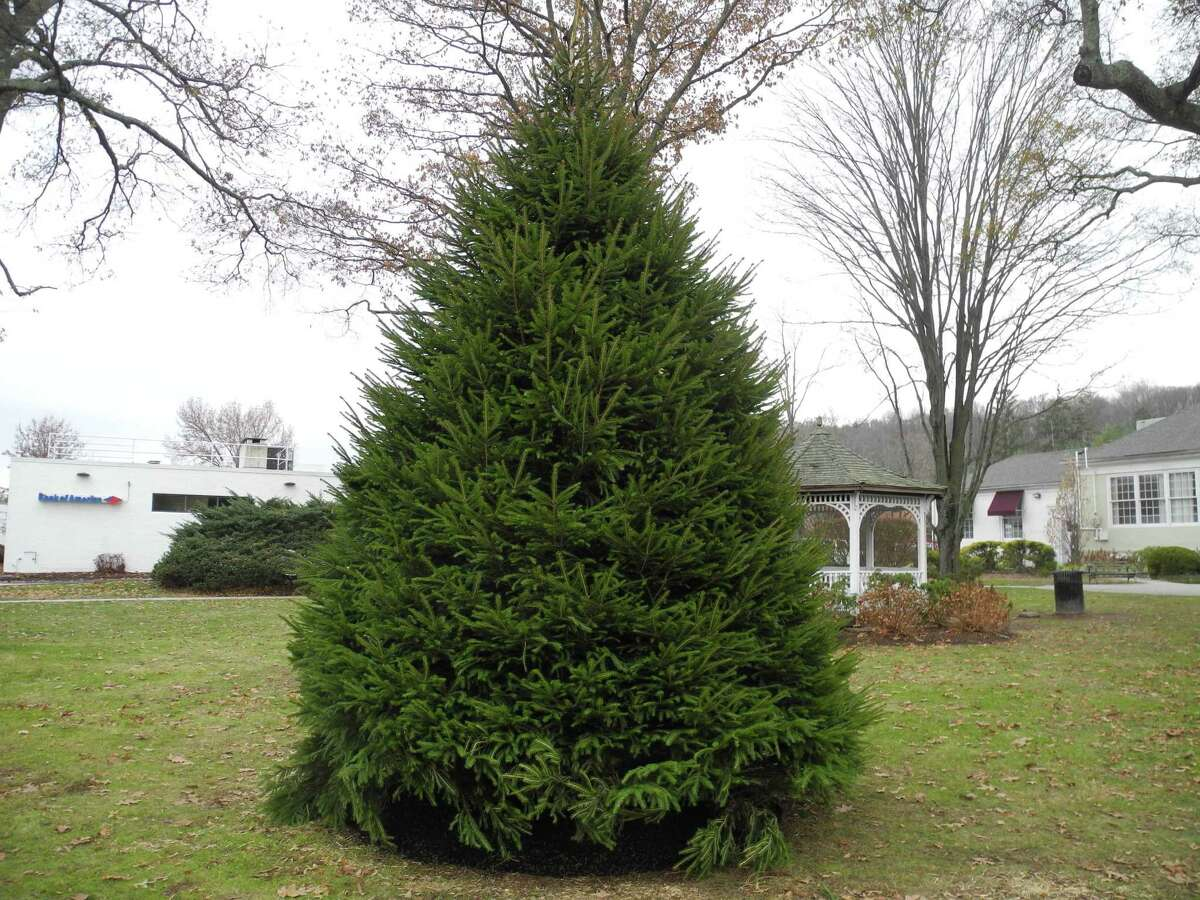 Wilton's new holiday tree is ready for lights.