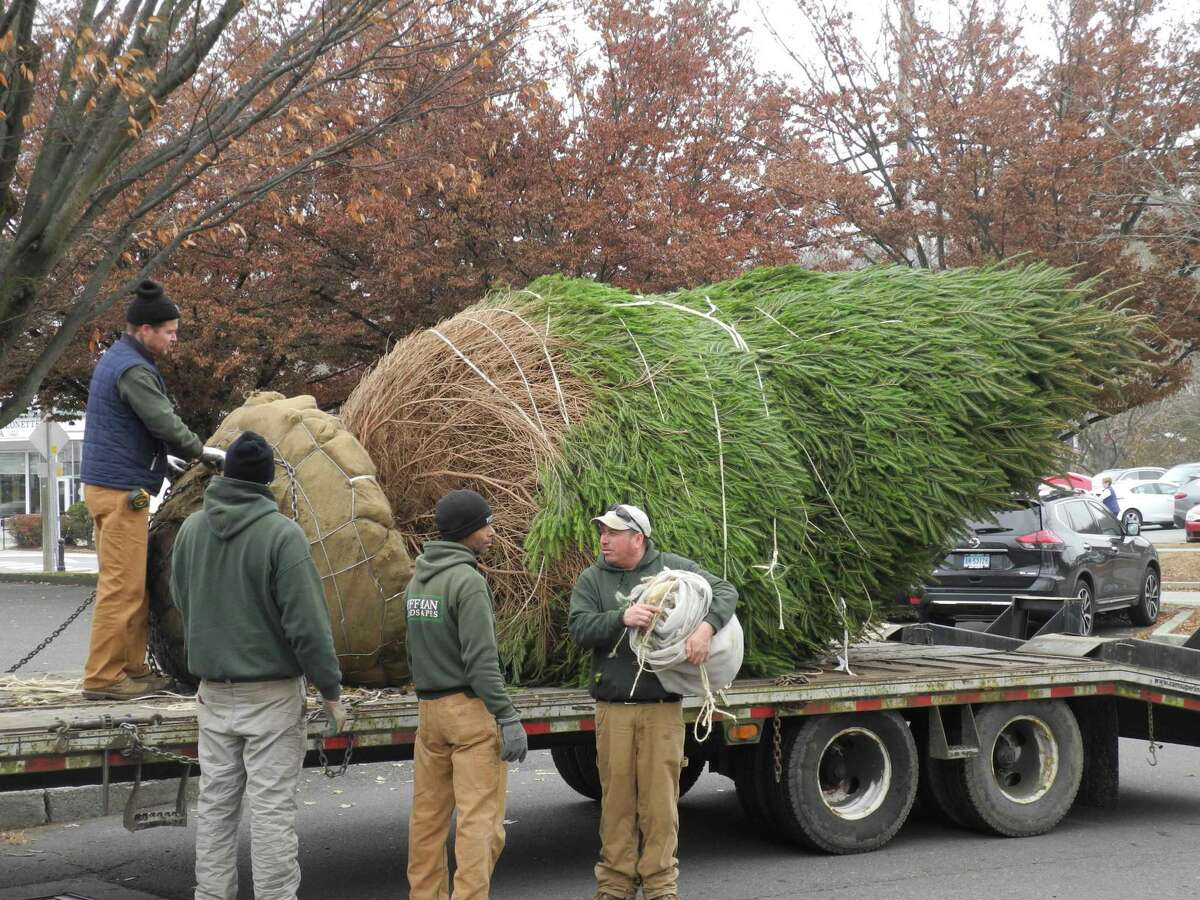 Hoffman Landscapes delivers the town's new holiday tree to Wilton Center on Nov. 27.