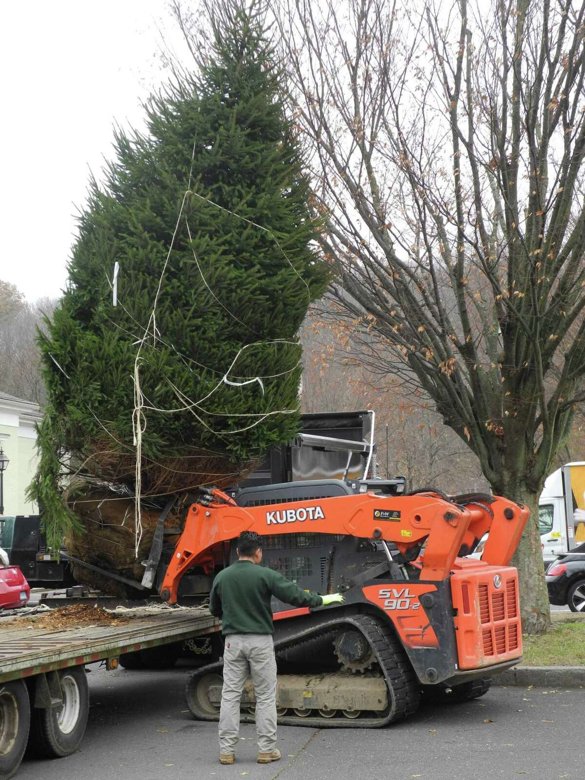 Wilton's new holiday tree is loaded onto a Bobcat skid steer for a short trip to the town green.