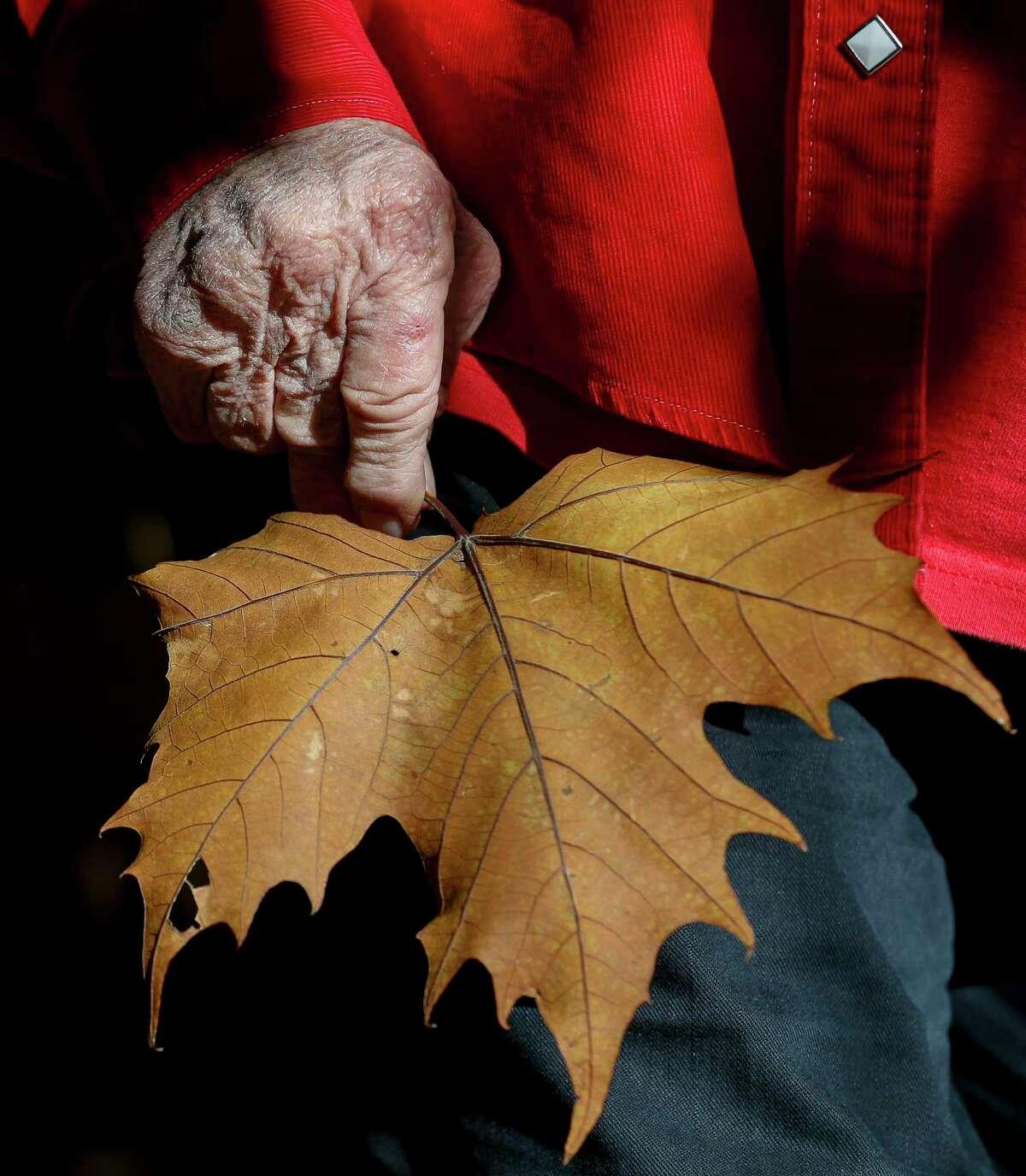 Barbara Arlington, 83, found a maple leaf while walking through the Edith L. Moore Nature Sanctuary.